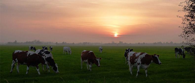 drón felvétel az állattartásban